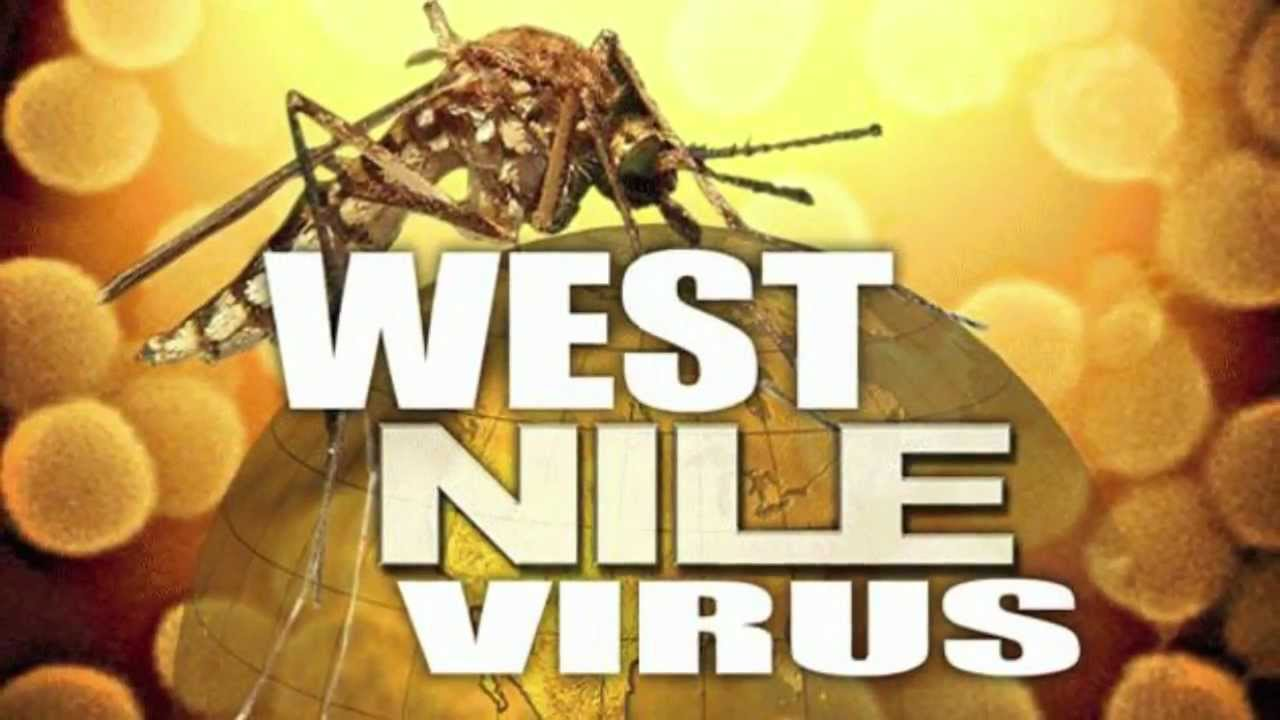 Galveston County's first human case of West Nile Virus comes up negative after further testing