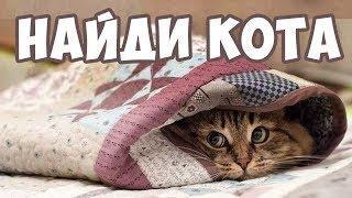 НАЙДИ КОТА! 🐈 Попробуй найди кота на картинке | БУДЬ В КУРСЕ TV