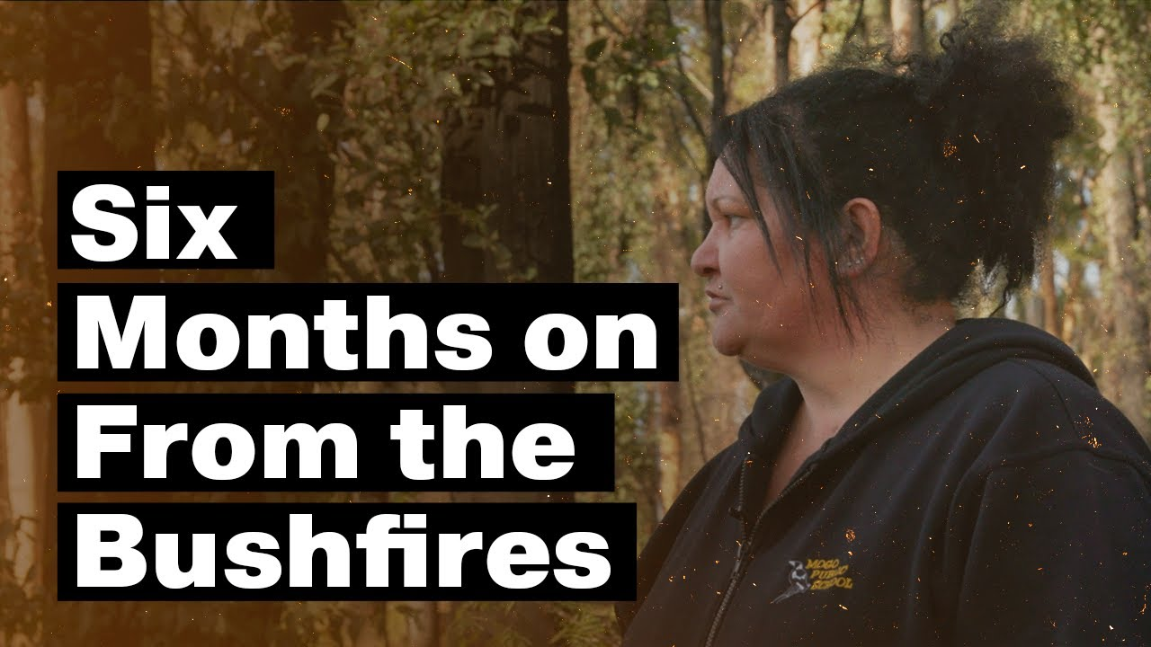 Amongst the embers: Six months on from the bushfires
