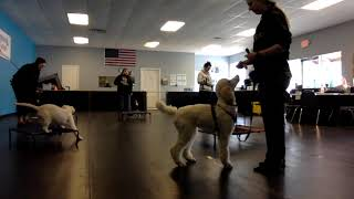 1/28/20 - Pup Camp Group Place and Release to Play