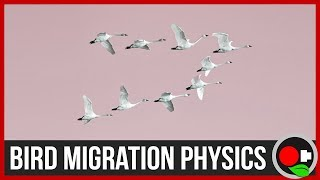Physics of Bird Migration