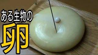 『謎の食材』を『針』で刺したら凄いものがでてきた。【微グロ】AlienEggs thumbnail