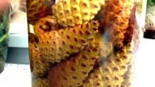 Целебная настойка из сосновых шишек
