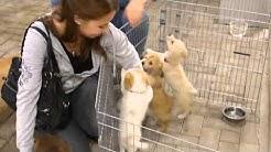 Hunde in Not - Ankunft Amsterdam - Diepholz - 29.10.2013
