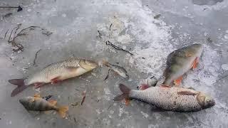 Зимняя рыбалка на речке
