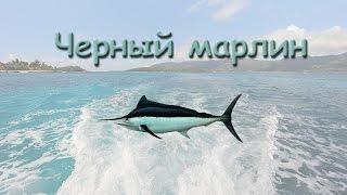 Русская Рыбалка 3.99 Черный марлин