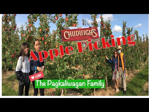 Chudleigh's In Halton Hills, Ontario Canada L Apple Picking L The Pagkaliwagan Family ❤️