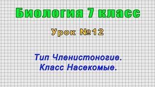 Биология 7 класс (Урок№12 - Тип Членистоногие. Класс Насекомые.)