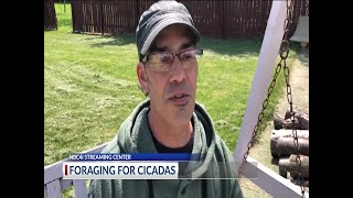 'Hillbilly chicken': Cicadas and other spring delicacies emerge in Columbus back yards