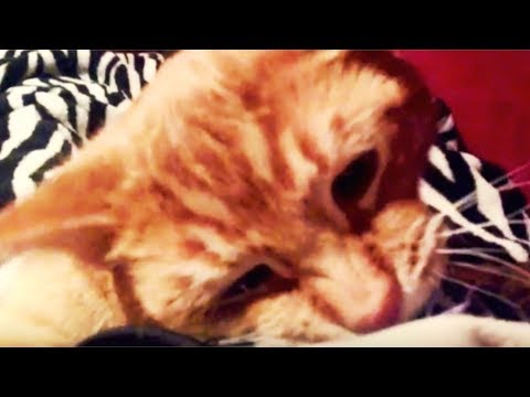 Surprise scary Tabby Cat attack video