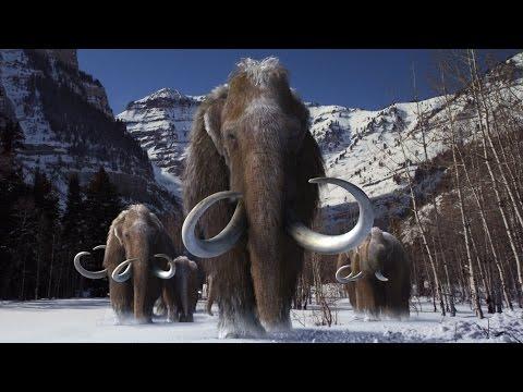 Woolly Mammoths to Return Jurassic Park Style?