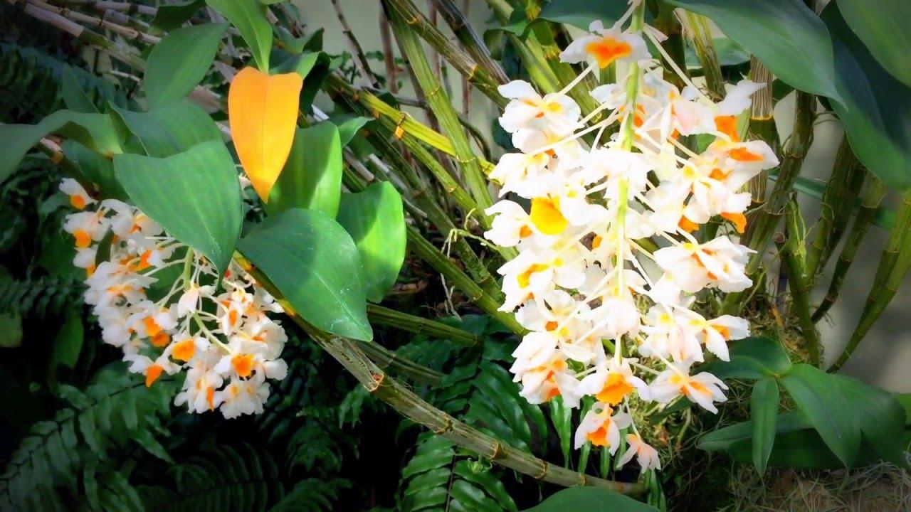 British Spring Blossoms Tiny White Orange Spring Flowers In