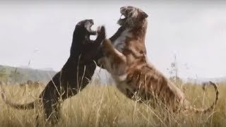 Jaguar vs Tiger Fight To Death - Wild Animals Attack