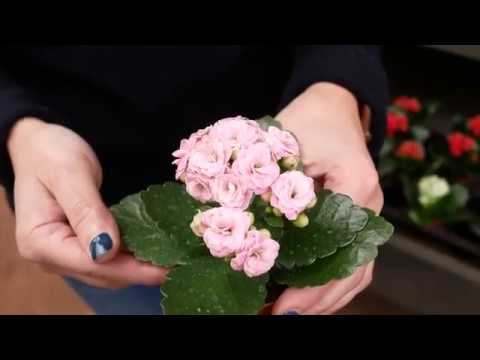 Tina Talks About Her Favorite Easy Care Indoor Flowering House