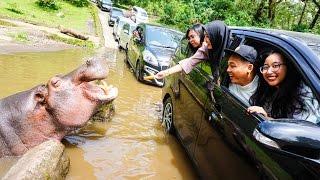 BOGOR VLOG #9 TAMAN SAFARI INDONESIA