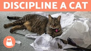 How to DISCIPLINE a CAT PROPERLY 🐱✅ (Cat Education)