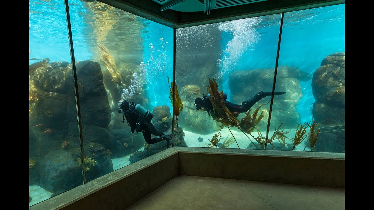First Divers Train At The San Diego Zoo Youtube