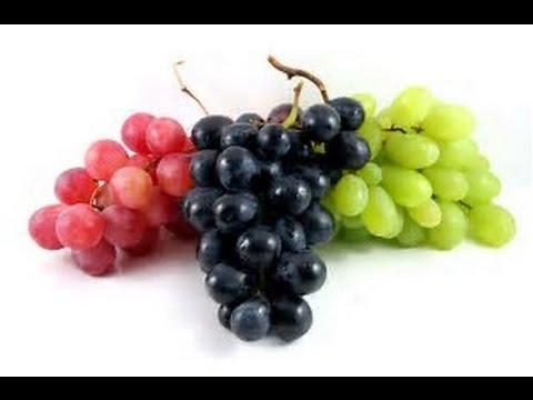 Planting a Mini Vineyard- Budget Friendly! 🍇