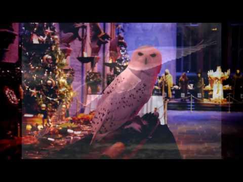 WHF - Weihnachtskalender: 25 - Ich träum von ner Schneeeule