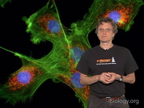 Microscopy: Introduction to Fluorescence Microscopy (Nico Stuurman)
