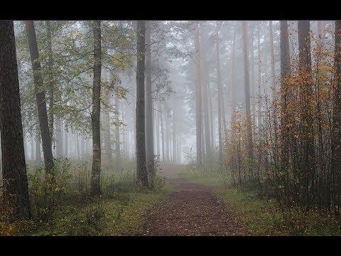 Туман в лесу  Октябрь