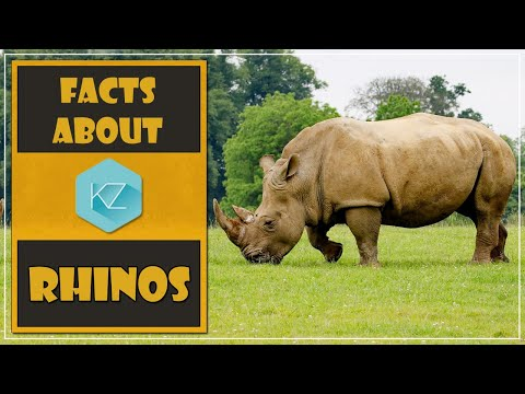 Fun Facts About Rhinos - Kids Education With KZ Learning