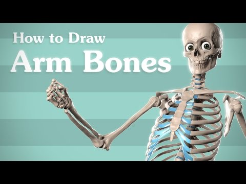 Drawing Arm Bones - Anatomy for Artists