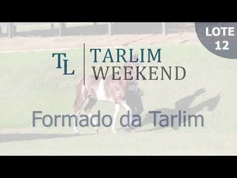 Lote 12 - Formado da Tarlim (Potros Tarlim)
