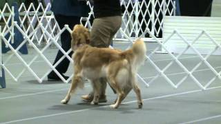 Obedience - Masters Utility Class - Jump Height 22 Inches