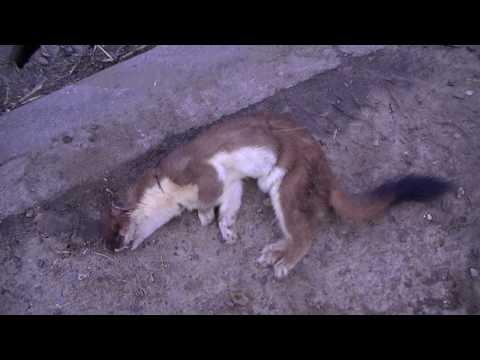 rabbit kills a stoat horror