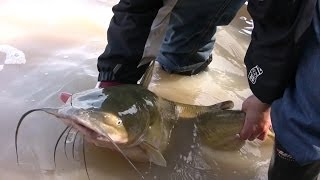 Boatless Angler - Shoreline Fishing for Channel Catfish and Bullhead Catfish