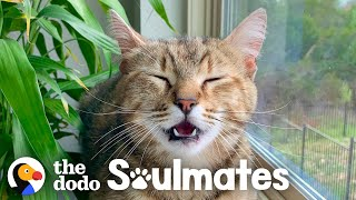 Stray Cat Can't Stay Away From Family's House | The Dodo Soulmates