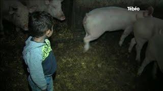 Finistère : La crise porcine continue chez les éleveurs