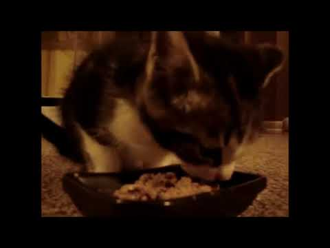 10 Crazy Cat Videos #2 | Funny Animals