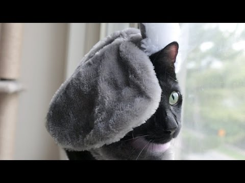 N2 the Talking Cat S4 Ep6 - Elephant vs Spider