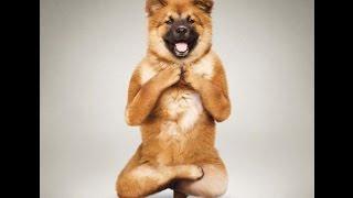 Танцующие собаки. Приколы про животных. Dancing dog.