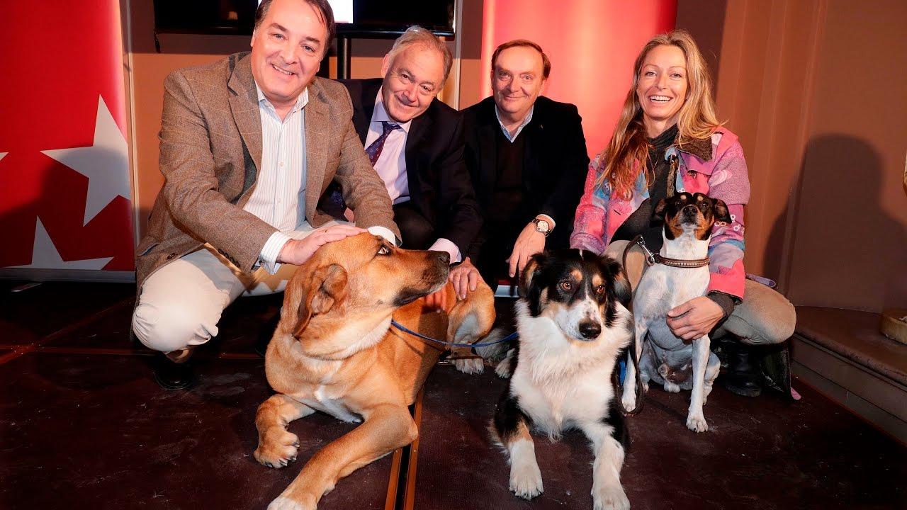 MascoMad, la app de Madrid para adopción de animales