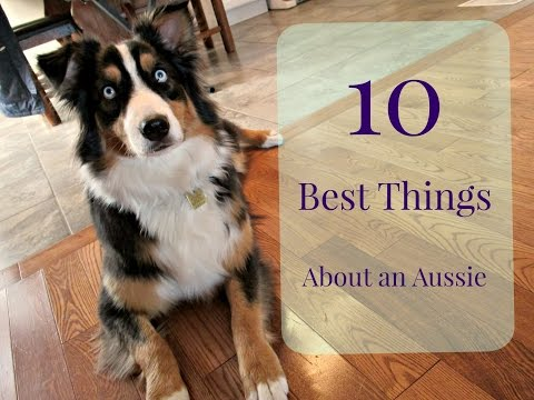 10 Best Things About an Australian Shepherd