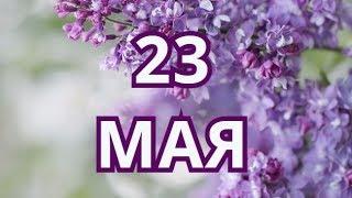 23 мая Всемирный день черепахи и другие праздники