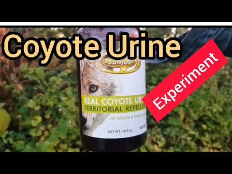 Trail Cam Experiment On Vancouver Island
