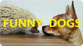 Подборка лучших приколов с собаками Compilation of best funny moments with dogs