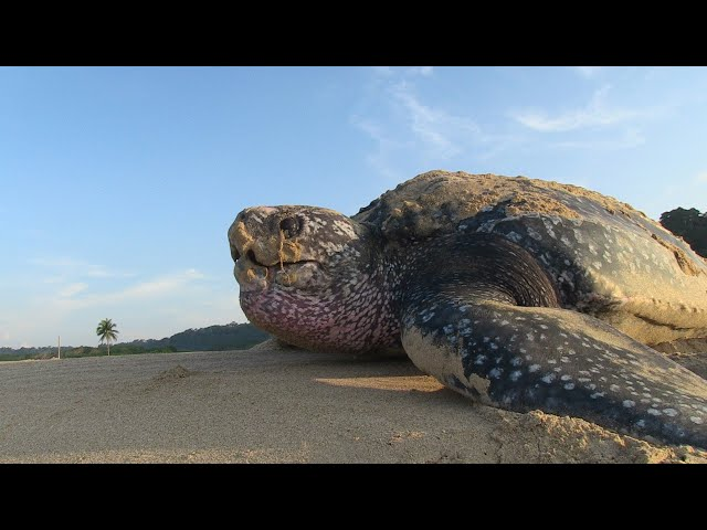 Turtle Diaries youtube