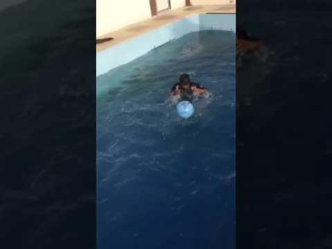My Favourite Hobby Swimming Youtube