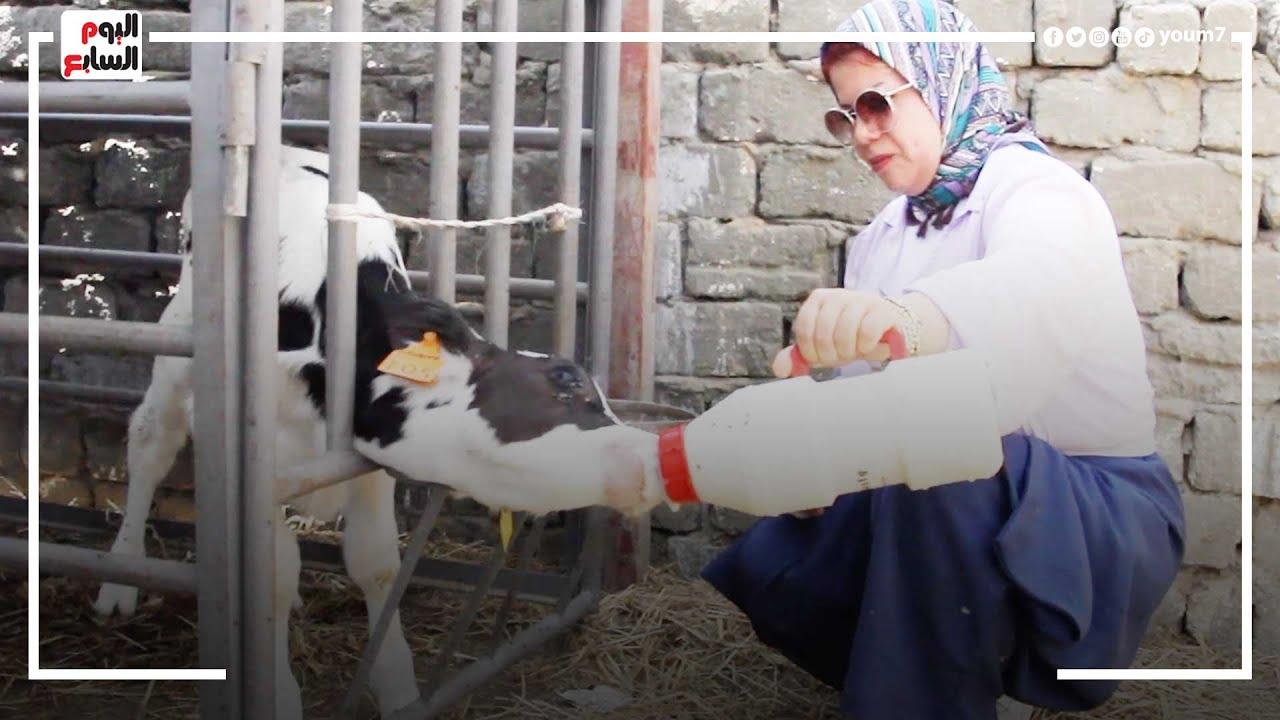 صورة فيديو : رحلة المزرعة بدأت ب٥٠ جنيه.. باعت رز بلبلن لحد ما عملت مزرعة كاملة لتسمين العجول