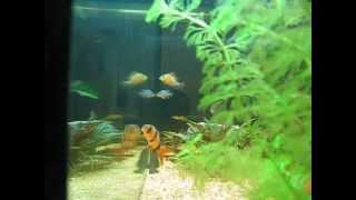 planted aquarium 125 litres 33 gallon