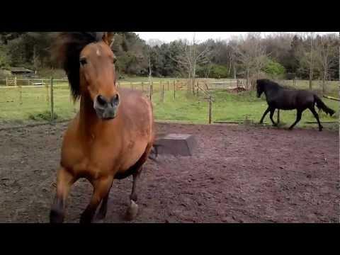 PRE paarden oosthoek
