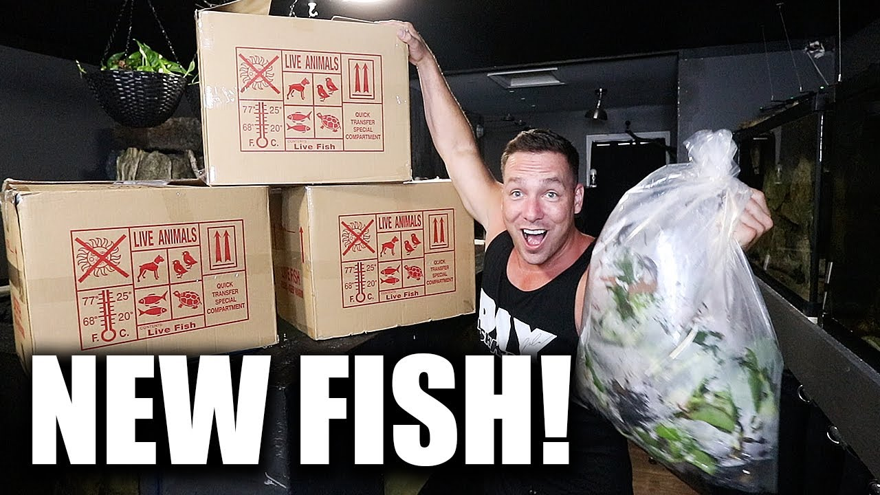 The SECRET fish for the MONSTER AQUARIUM!!