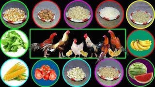 What To Feed Chickens || What Do Chickens Eat