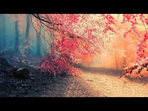 Melodic Progressive House mix Vol 11 (Beauty In The Shadows)