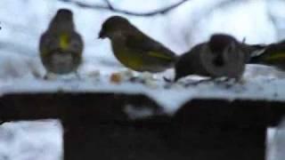 Putni ziemā 3